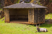 A Ibex in captivity — 图库照片
