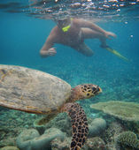 Man swimming with terrapin on coral reef in blue water — Stock Photo