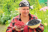 A woman collects black currants and raspberries — Stock Photo