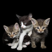 Four Young Cats — Stock Photo