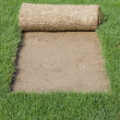 Stock Photo: Grass Carpet Cover
