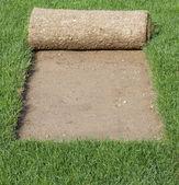 Grass Carpet Cover — Stock Photo