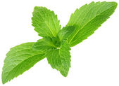 Stevia Rebaudiana, Sugar Substitute Cutout — Stock Photo