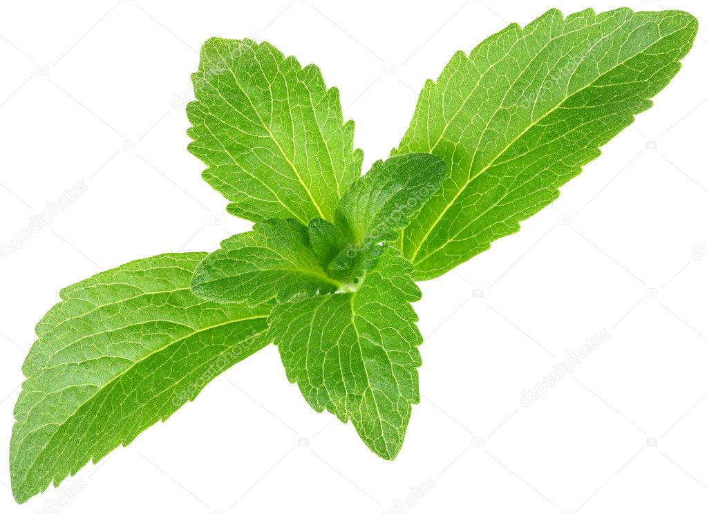 Stevia rebaudiana, sweet leaf sugar substitute isolated on white background — Stock Photo #10993201