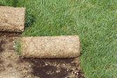 Grass Carpet Rolls — Stock Photo