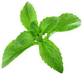 Stevia Rebaudiana Leafs Cut Out — Stock Photo