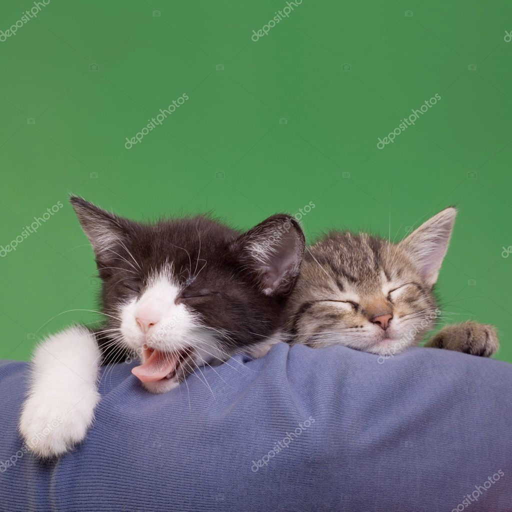 Two Dreamy Cats Domestic Cats Isolated on Green Background — Stock Photo #11130912