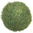 Stock Photo: Grass Ball