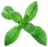 Stevia Leafs Cut Out — Stock Photo
