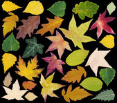 Autumn Leafs Cut Out — Stock Photo