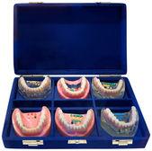 Dentures ToGo — Stock Photo