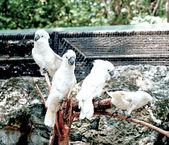 The Family of cockatoo — Stock Photo