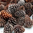 The Pine cone — Stock Photo #10847003