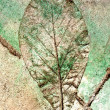 Stock Photo: Leaf imprint in concrete