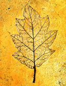 The Imprint of leaf isolated on cement background — Stock Photo