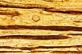 The Wood texture — Stockfoto