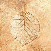 The Leaf imprint in concrete — Stock Photo