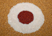 The Art of rice and paddy and unpolished rice — Stock Photo