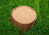 The Paddy on bamboo basket in green rice field — Stock Photo
