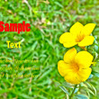 Yellow flower — Stock Photo #11565612