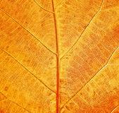 Style grunge tekstur liści — Zdjęcie stockowe