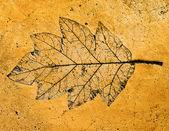 Das Impressum des Blattes auf Zement hintergrund isoliert — Stockfoto