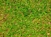 The Green grass background texture — Stockfoto