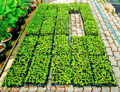 The Plants in green house — Stock Photo