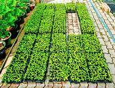Le piante in casa verde — Foto Stock