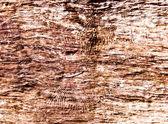 The Tree bark texture — Stock Photo