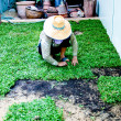 Adjust soil floor before do green grass background — Foto Stock #11691633