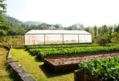 The Nursery vegetables on green house — Stock Photo