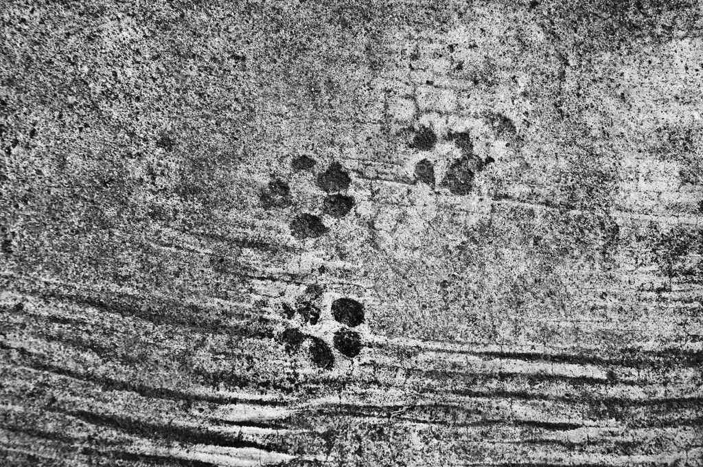 The Dog's footprinted on cement floor — Stock Photo #11948287