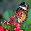 Butterfly — Stock Photo #12097193