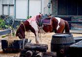 Koń jedzący siana — Zdjęcie stockowe
