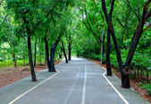 The Road along the park — Stock Photo