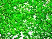 De groene bladeren op hemelachtergrond — Stockfoto
