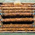 bir sürü kovan arı — Stok fotoğraf