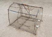 Trampa de peces canasta atrapar cangrejos y peces — Foto de Stock
