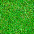 The Green grass background texture - Stock Photo