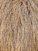 O arroz colhido é secado — Foto Stock