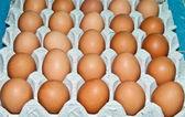Taze yumurta beyaz zemin üzerine izole büyük tepsi — Stok fotoğraf