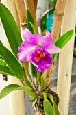 De mooie paarse orchidee — Stockfoto