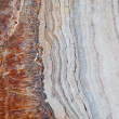 The Level fossil of old rock wood — Stock Photo