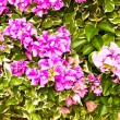 Stock Photo: Purple flowers.