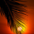 Sunset behind coconut leaf — Stock Photo
