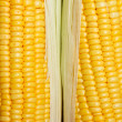 Bright color sweet corn - Stock Photo