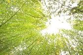 Sunbeam over tropisch woud — Stockfoto