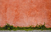 Tropical grass on old wall — Stock Photo