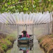 Agriculturist watering in fruit garden - Stock fotografie